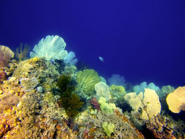 Such stunning corals